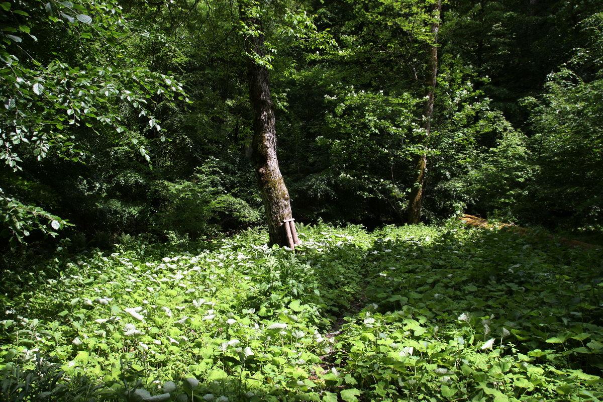 Der Pfad in den Dschungel der Nebenschlucht