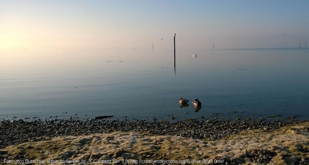 Auf dem Bodensee herrscht noch Ruhe und reinste Tiefenentspannung