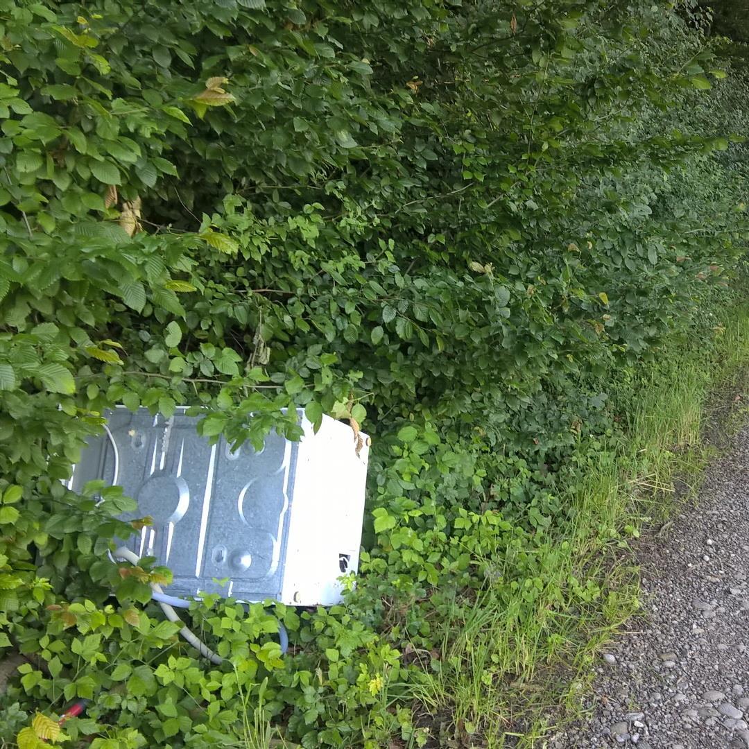 Tote Waldwaschmaschinen werden gar nicht mal so selten direkt am Wegrand angetroffen, galten aber als weitgehend ausgestorben!